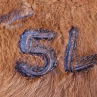5L Red Angus