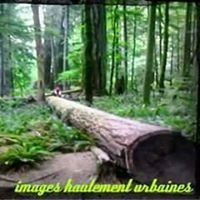 Cathedral Grove Forest, Vancouver Island