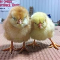 Arkansas 4-H Poultry