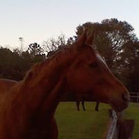 Race Horse Reclaim Thoroughbred Rescue
