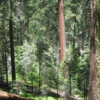 Yosemite Forest Dynamics Plot