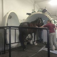 Clermont Farm's New York Equine Fitness Center