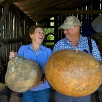Pumpkin Hollow Gourds