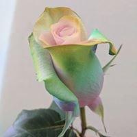 New York Rose Sellers