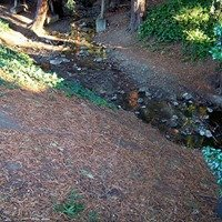 Codornices Creek