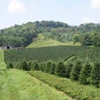 Big Ridge Tree Farm