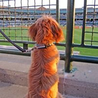 Dog Day at the Park at Louisville Slugger Field
