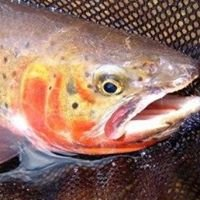 Five Rivers Trout Unlimited
