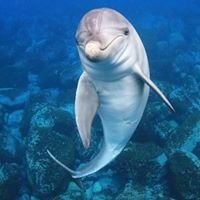 Dolphin Club Miyakejima