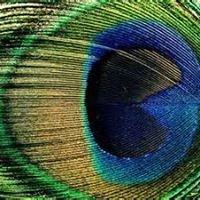 NPS Foundation Peacock Shop