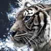 Tiger SEO Internet Marketing