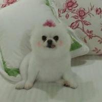 Bel Air Pet Care