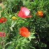 Pebble Hall Wildflowers