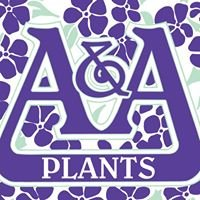 A&A Plants inc.