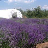 Harbor View Lavender Farm