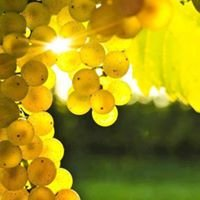 Nostos-Wines