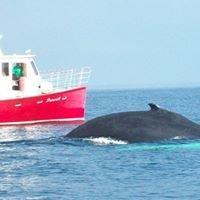 Scenic Pursuit Boat Tours Ltd.