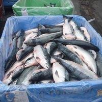 Keltic Seafoods Ltd