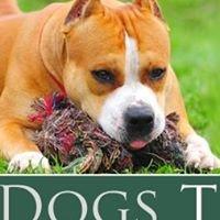 No Bad Dogs Training
