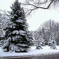 Sumner's Wintergreen Tree Farm