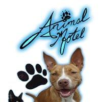 Animal Motel