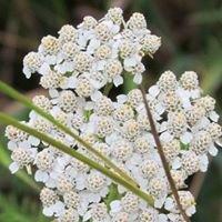 Appalachian Botanical Alliance