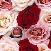 Roses Flower Boutique
