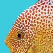 Biotop Aquaristik