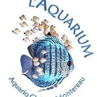 L'Aquarium : Aquario club de Montereau