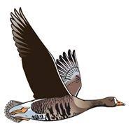 Birdwatch Ireland Westmeath Branch