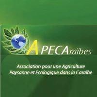 Agriculture  Paysanne et Ecologique dans la CAraïbe