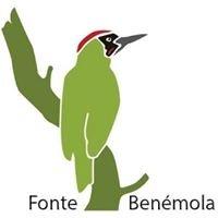 Fonte Benémola - Anilhagem Científica de Aves