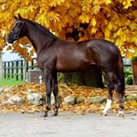 Brookwood Equestrian Center