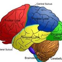 Brain Injury Information Network of Maine
