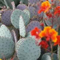 University of Arizona: Seniors and Seizures