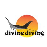 Divine Diving  Komodo Flores