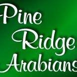 Pine Ridge Arabians - Arabian Horses