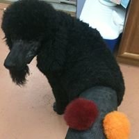 Smyth County Animal Hospital -  Pet Grooming