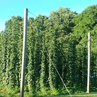 Honey Hill Hops