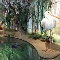 Museum FLUVIUS-Fluss & Teich