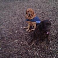 Bark In The Park @ Lancaster City Park