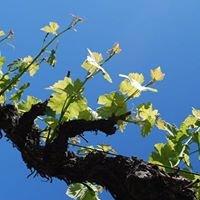 Auriga Wine Cellars