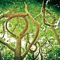 Sesselbaumpark