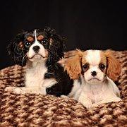 Hooves n Hounds Pet Portraiture