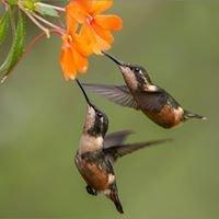 Puembo Birding Garden