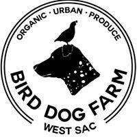 Bird Dog Farm