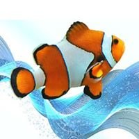 Tropical Dreams Aquariums