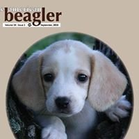 The American Beagler Magazine