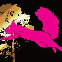Flying Squirrel Calgary
