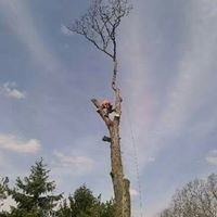Pusateri Brothers Tree & Landscaping Service